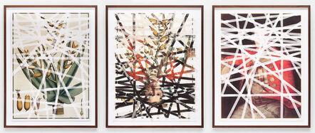 Mikhael Subotzky, 'Sticky-tape Transfer 13, Quiver Tree / Robert Jacob Gordon', 2015