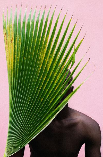 Lakin Ogunbanwo, 'Untitled (Palm Frond)', 2013