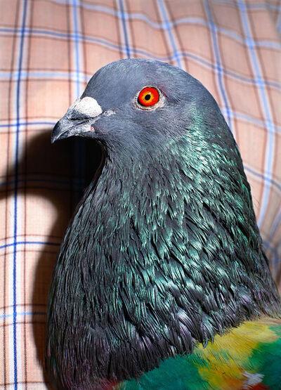 Ricardo Cases, 'Untitled (Pigeon)', 2011