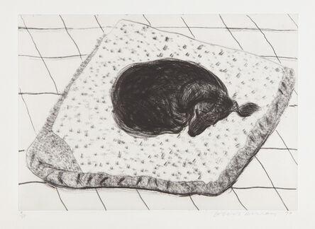 David Hockney, 'Dog Etching No. 15, from Dog Wall', 1998