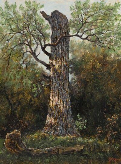 Jerry Malzahn, 'Broken Oak, Fort Worth, Texas', 2015