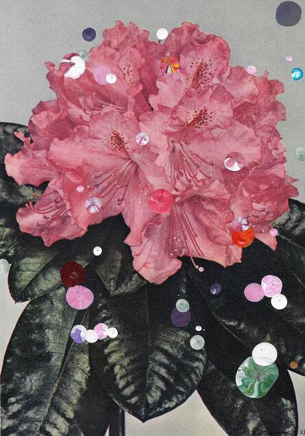 Sebastiaan Bremer, 'Rhododendron Hybridum Prinses Marijke', 2015