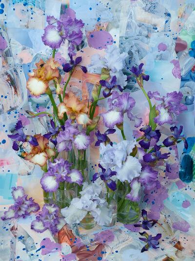 Christopher Beane, 'Lavender Bearded Iris with Siberian (Baroquecoco 2019)', 2019