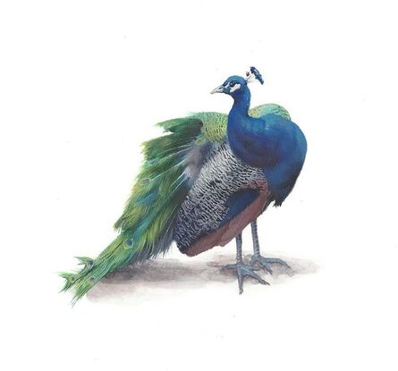 Dina Brodsky, 'Peacock', 2019