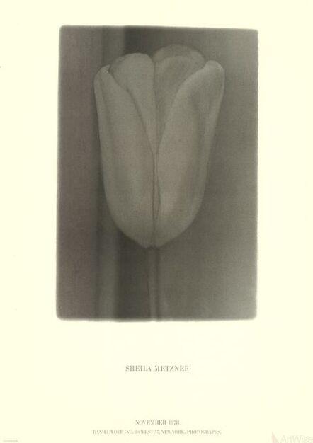 Sheila Metzner, 'Flower', 1978