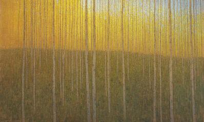 David Grossmann, 'Cathedral Grove', 2015