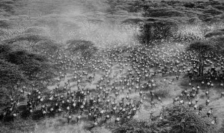 Griet Van Malderen, 'The gathering, Tanzania', 2016