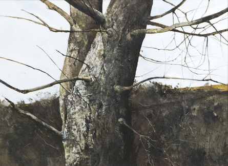 Gregory Sumida, 'Branches', 1971