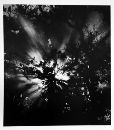 Brett Weston, 'Sunburst, Hawaii', 1978