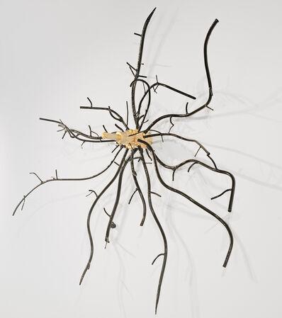 Dalya Luttwak, 'Root of Birch Tree', 2014