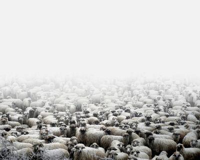 Tamas Dezso, 'Sheep Farm (Silvasu de Sus, West Romania)', 2012