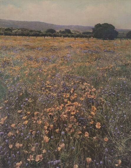 Willard Worden, 'Poppies and Lupine', 1915