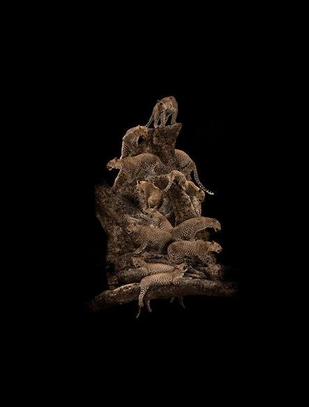 Mario Arroyave, 'Leopard Tree, ed. 2/5', 2016