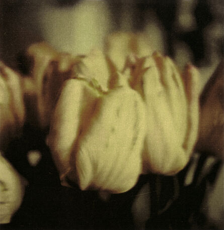 Cy Twombly, 'Tulips', 1985