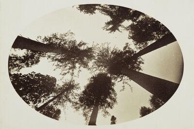 Carleton E. Watkins, 'Among The Tree Tops Calaveras Grove', 1878