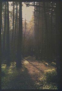 David K Aimone, 'Monhegan Spruce Forest'