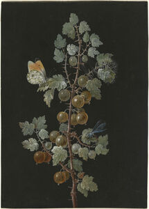 Barbara Dietzsch, 'A Branch of Gooseberries with a Dragonfly, an Orange-Tip Butterfly, and a Caterpillar', 1725-1783