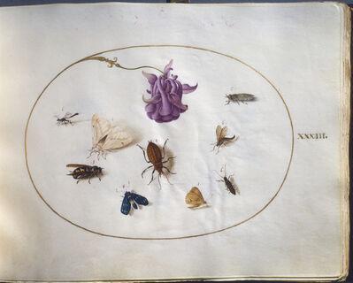 Joris Hoefnagel, 'Animalia Rationalia et Insecta (Ignis), volume I', ca. 1575/1580