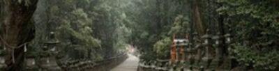 David H. Gibson, 'Toward Kasuga Shrine, Along Pathways of Lanterns(08 4951)'