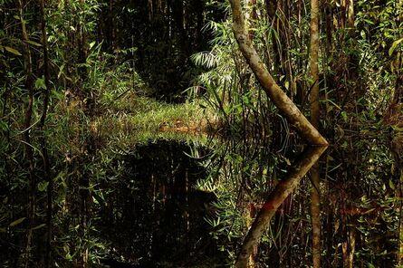 Attila Lorant, 'River Under Dome of Trees', 2005