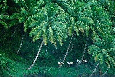 Jeff Divine, 'E Bay, Mentawai's, Sumatra, ', 2001
