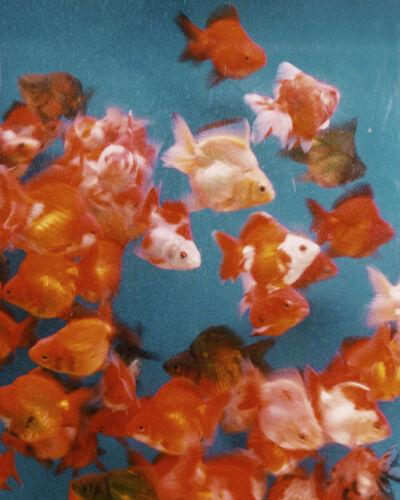 Alexandra Leese, 'Gold Fish', 2017