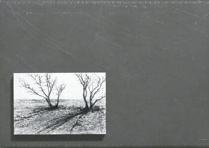 katie maratta, 'trees and shadows ', 2015
