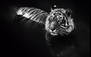 David Yarrow, 'The Killer', N/A