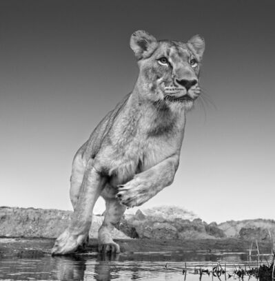 David Yarrow, 'Emma, Dinokeng, South Africa 2017', 2017