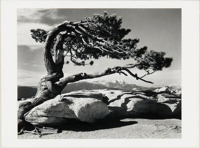 Ansel Adams, 'Jeffrey Pine, Sentinel Dome', 1940 printed later