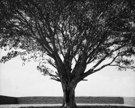 Shirin Neshat, 'From Tooba Series', 2002