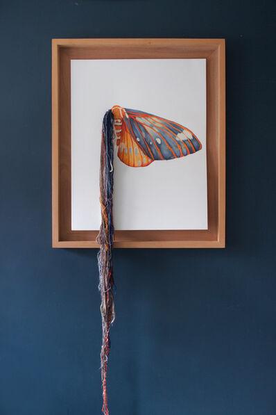 Lauren Levato Coyne, 'Walnut Moth', 2017