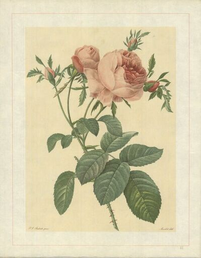 Pierre Joseph Redouté, 'Rosa Centifolia Foliacea; Variete du Rosier � centfeuilles', 1938