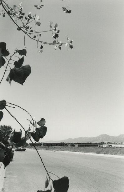 Robert Adams (b.1937), 'Cottonwood Leaves, Boulder County, Colorado, 1988', 1988