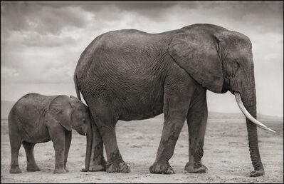 Nick Brandt, 'Elephant Mother & Baby at Leg, Amboseli', 2012