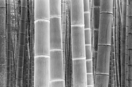 DaeSoo Kim, 'Colors Of The Bamboo'
