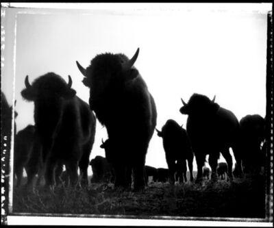 Donald Woodman, 'Where the Buffalo Roam', 1980s