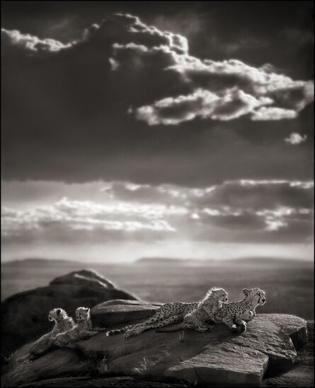 Nick Brandt, 'Cheetah & Cubs Lying on Rock, Serengeti 2007', 2007