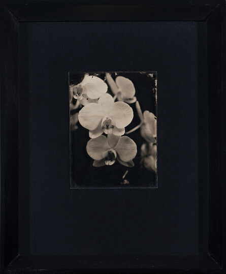 Vanessa Cowling, 'Orchid', 2019