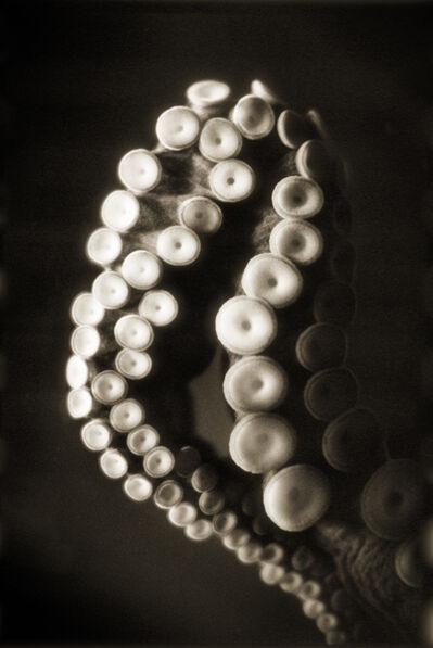 Henry Horenstein, 'Giant Pacific Octopus, Enteroctopus Dofleini'