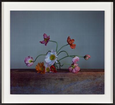 Richard Learoyd, 'Eccentric Poppies', 2020