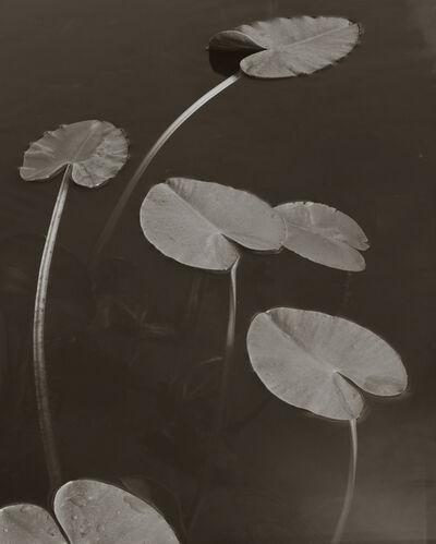 Koichiro Kurita, 'Floating Leaves, Boundary Water, MN', 1999