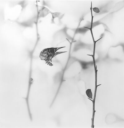 Rebecca Palmer, 'A View of Thorns, from the series Meditations', 2012