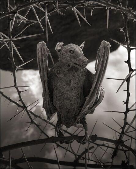 Nick Brandt, 'Calcified Bat II, Lake Natron, 2012', 2012