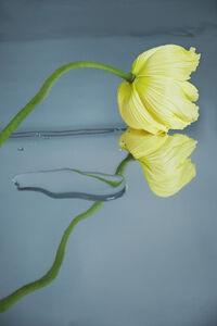 Sophie Delaporte, 'Flowers#04', 2020