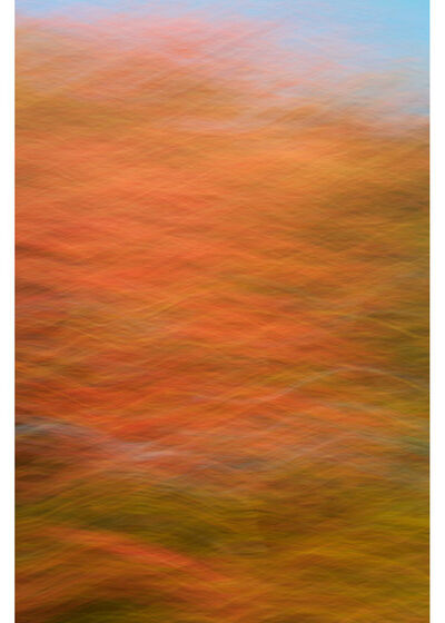 Peter Daitch, 'Fall Colors 322', 2015