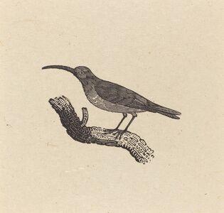 Thomas Bewick, 'A Bird', ca. 1800