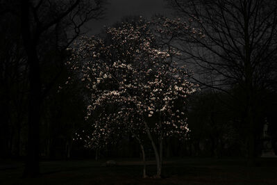 Shen Wei 沈玮 (b. 1977), 'Magnolia Tree', 2016