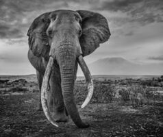 David Yarrow, 'Craig', 2020