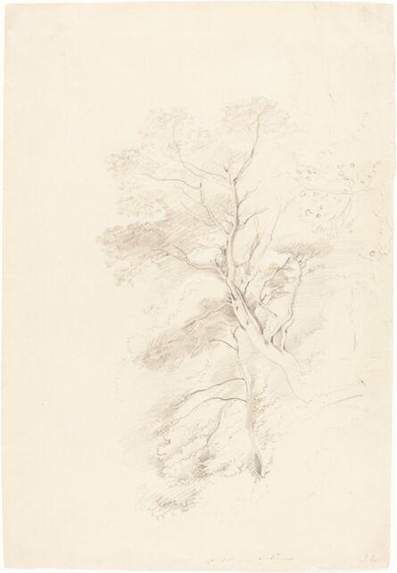 John Linnell, 'A Beech Wood', 1815